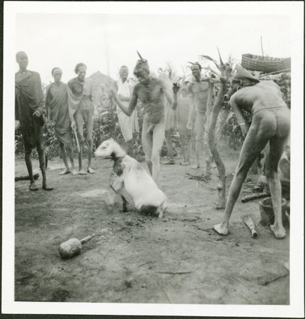 Man Being Castrated