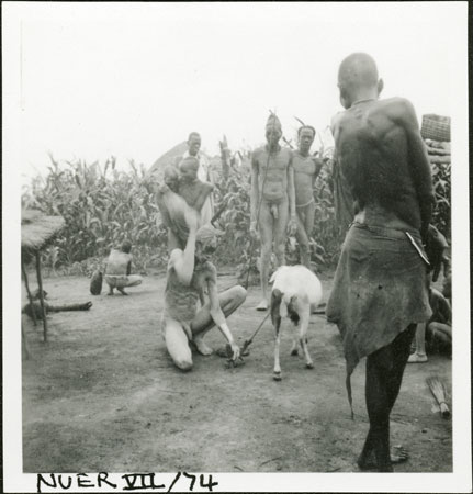 Nuer sheep sacrifice