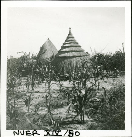 Nuer huts and garden