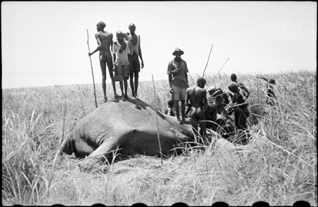 Hunting elephant in Nuerland
