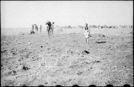 Nuer porters and cattle camp