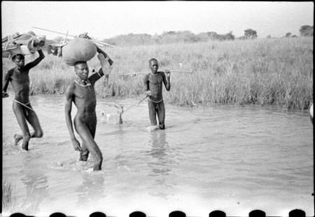 Nuer porters in stream