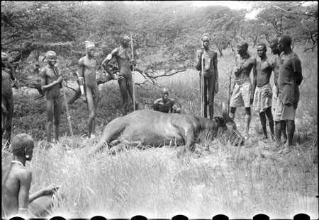 Buffalo hunt in Nuerland
