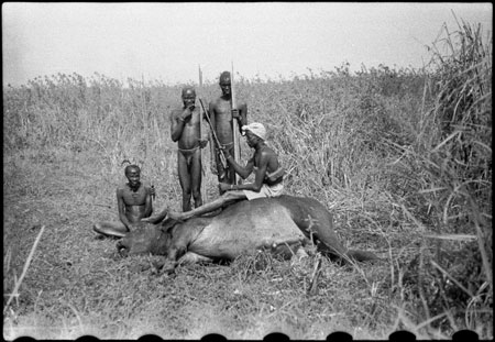 Nuer porters with buffalo